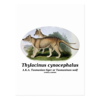 Thylacinus cynocephalus (Tasmanian tiger or wolf) Postcard