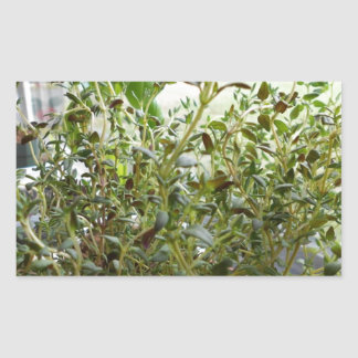 Thyme Green Herb Photography Stickers