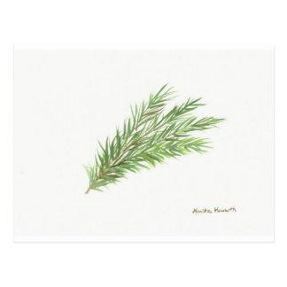 Thyme herb botanical plant art print postcards