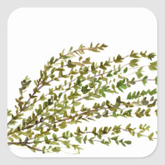 Thyme herbs kitchen art watercolour painting square sticker