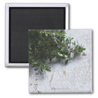 Thyme on old wooden table magnet