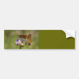 Thymelicus lineola bumper sticker