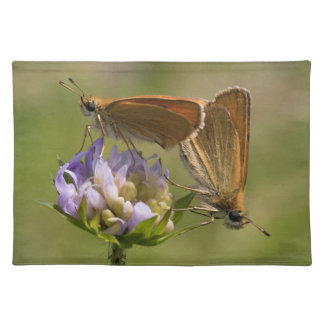 Thymelicus lineola placemat