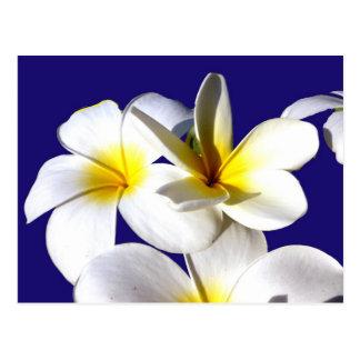 ti plant flowers yellow white blue back.jpg postcard