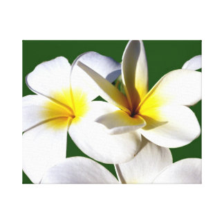 ti plant flowers yellow white green back canvas print