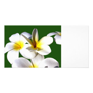 ti plant flowers yellow white green back photo cards