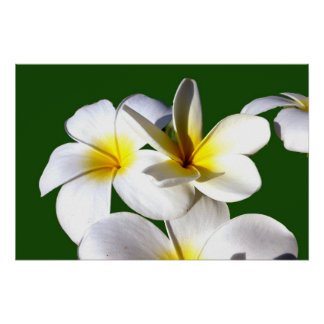 ti plant flowers yellow white green back poster