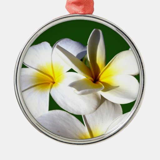 ti plant flowers yellow white green back round metal christmas ornament
