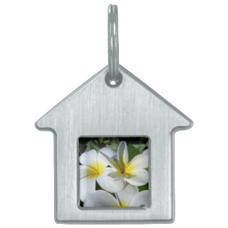 ti plant flowers yellow white pet ID tags