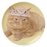 Tiara que lleva del gato plato de comida