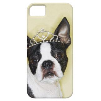 Tiara que lleva del perro iPhone 5 carcasas