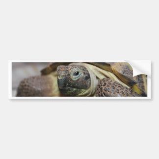 Tibbs Bumper Sticker