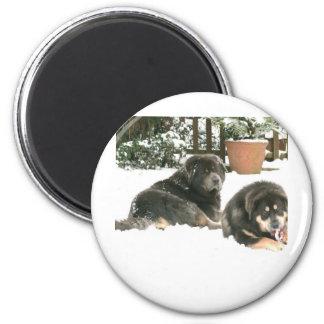 Tibetan Mastiff Caspar & Jampo 2 Inch Round Magnet