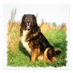 Tibetan Mastiff Invitation