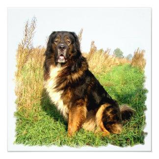 """Tibetan Mastiff Invitation 5.25"""" Square Invitation Card"""