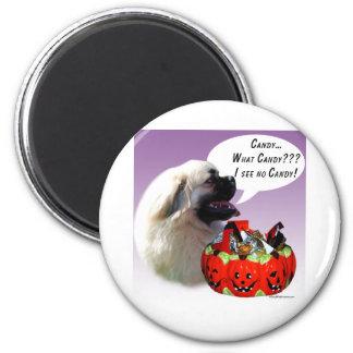 Tibetan Spaniel Halloween Candy Magnet