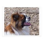 Tibetan Spaniel.png Postcard
