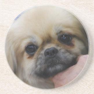 Tibetan Spaniel Puppy Coaster