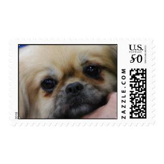 Tibetan Spaniel Puppy Postage Stamp