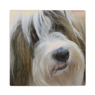 Tibetan Terrier Maple Wood Coaster