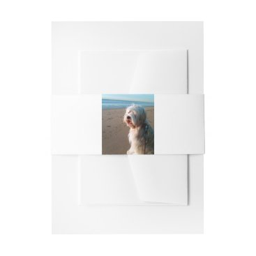 tibetan terrier on beach invitation belly band