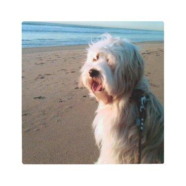 tibetan terrier on beach metal print