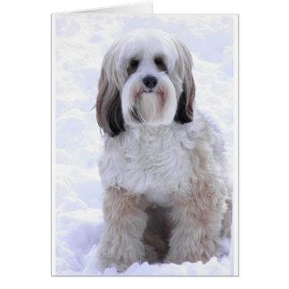 Tibetan Terrier Sable and White Card