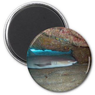 Tiburón 2 del filón de Whitetip Imán Redondo 5 Cm