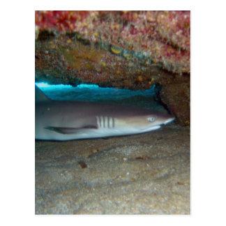 Tiburón 2 del filón de Whitetip Postal