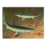 Tiburón azul de la vida acuática marina del postales