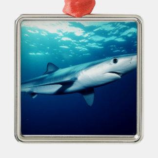 Tiburón azul adorno cuadrado plateado