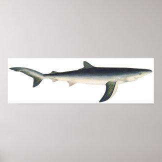 Tiburón azul del vintage, vida acuática marina del póster