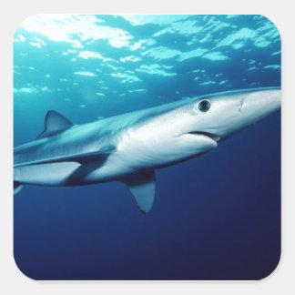 Tiburón azul pegatina cuadrada