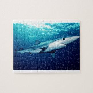 Tiburón azul rompecabeza con fotos