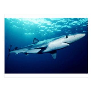 Tiburón azul postal