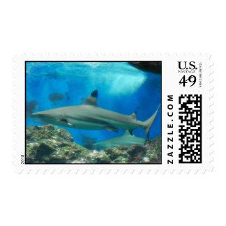 Tiburón con el sello del filón