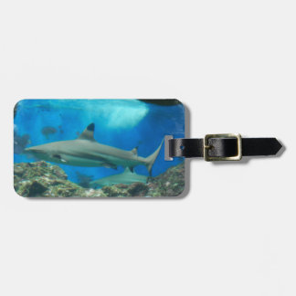 Tiburón con la etiqueta del equipaje del filón etiquetas de maletas