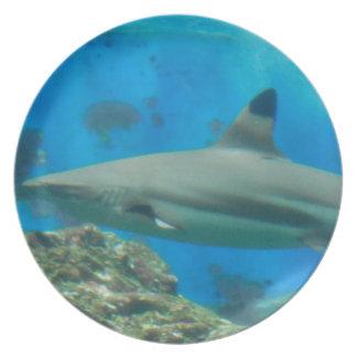 Tiburón con la placa del filón platos