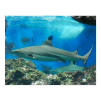 Tiburón con la postal del filón