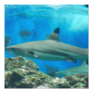 """Tiburón con las invitaciones del filón invitación 5.25"""" x 5.25"""""""