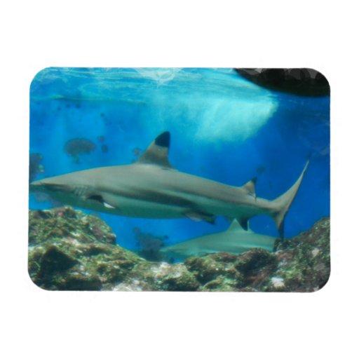 Tiburón con los imanes flexibles del filón