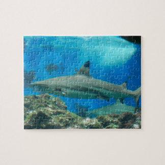 Tiburón con rompecabezas del filón