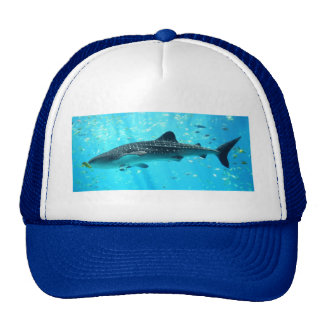 Tiburón de ballena azul fresco elegante elegante d gorra