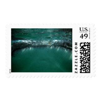 Tiburón de ballena, Isla Holbox, México Estampilla
