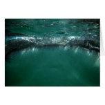 Tiburón de ballena, Isla Holbox, México Tarjeta