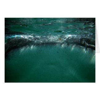 Tiburón de ballena, Isla Holbox, México Tarjeta De Felicitación