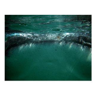 Tiburón de ballena, Isla Holbox, México Tarjetas Postales