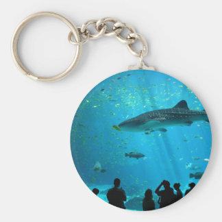 Tiburón de ballena masculino en el acuario de Geor Llavero