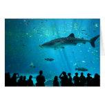 Tiburón de ballena masculino en el acuario de Geor Tarjetas