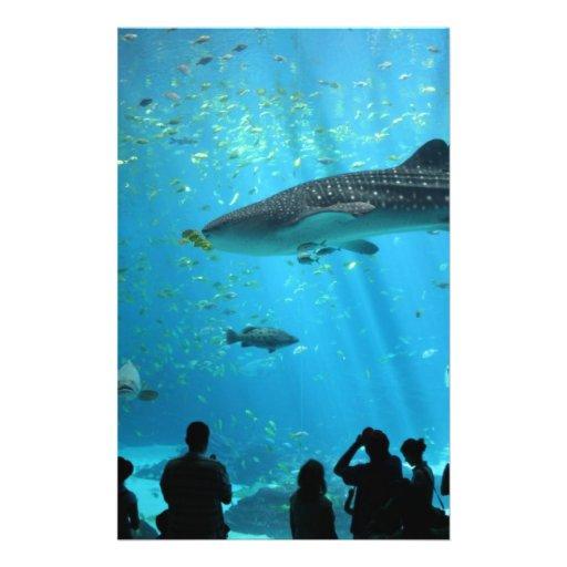 """Tiburón de ballena masculino folleto 5.5"""" x 8.5"""""""